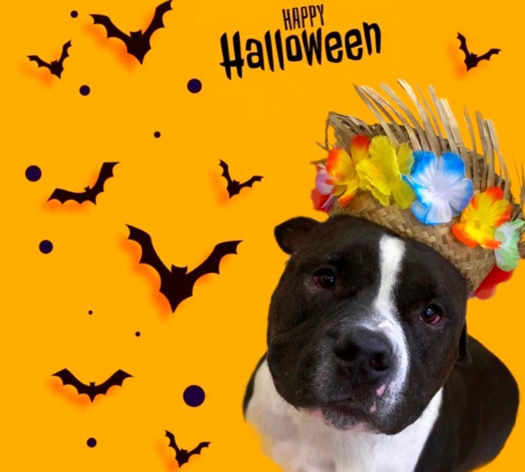 A136623 Jax Halloween.jpg