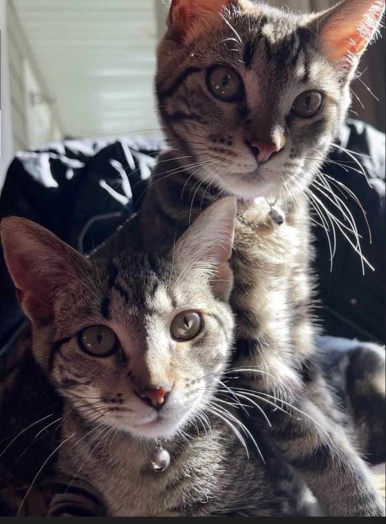 Mushu & Ella1.jpg