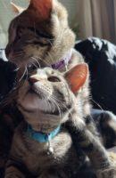 Mushu & Ella2.jpg