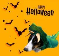 A126906 Sadie Halloween.jpg